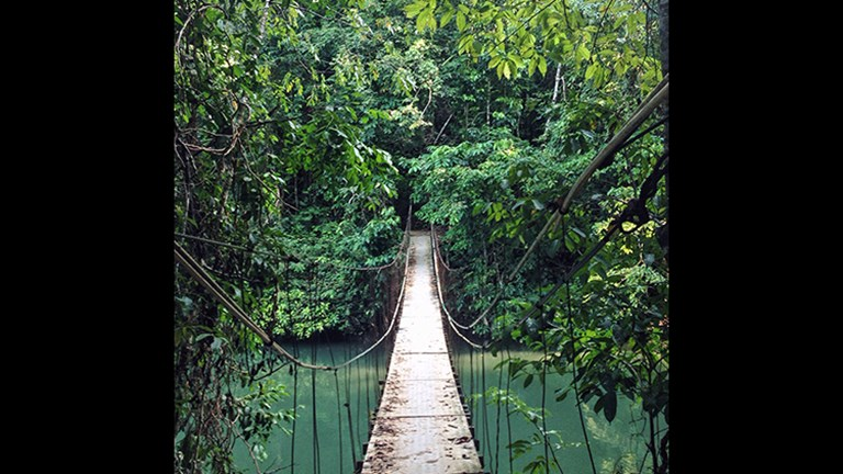 After disembarking in Puerto Jimenez, passengers can trek in the nearby jungle or select an excursion to Corcovado National Park. // © 2016 Michelle Juergen