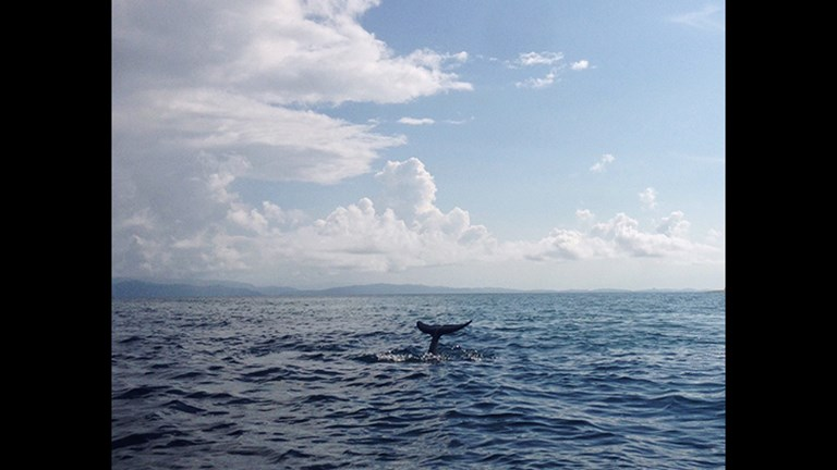 Dolphins swam alongside the small boat as our guide taught us about their biology, behavior and habits. // © 2016 Michelle Juergen
