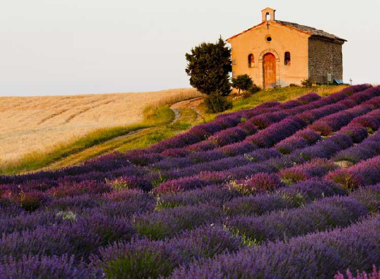 Lavender is grown throughout Provence // © 2013 Thinkstock
