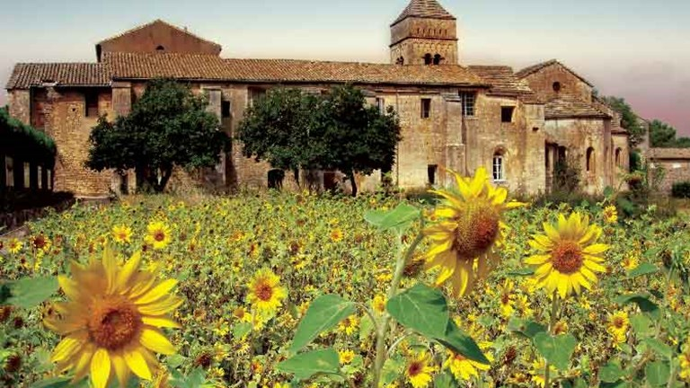 Sunflowers grow at the asylum in St. Remy where Van Gogh stayed and painted // © 2013 mythofthenorth