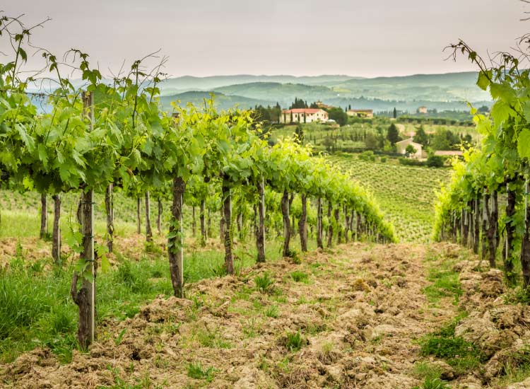 Enjoy a day in Bordeaux's vineyards. // © 2015 iStock