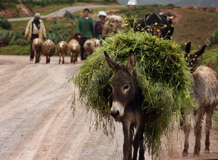 Donkey in Peru's Sacred Valley, Honorable Mention, 2014 TravelAge West reader photo contest // © 2014 Michael Costanzo