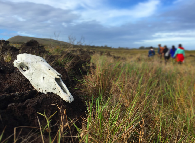 Hiking Easter Island, Honorable Mention, 2016 TravelAge West reader photo contest // © 2016 Jacob Marek