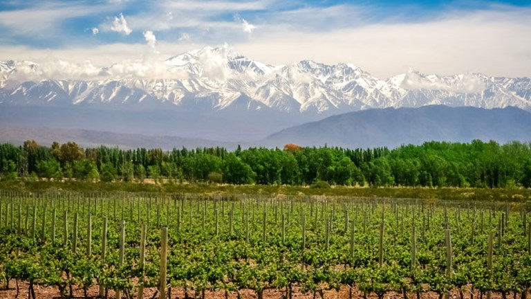 Mendoza is largely responsible for Argentina's wine production. // © 2017 Getty Images