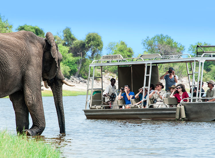 Guests onboard AmaWaterways' Discover Africa sailings will have a chance to see wildlife up close. // © 2017 AmaWaterways