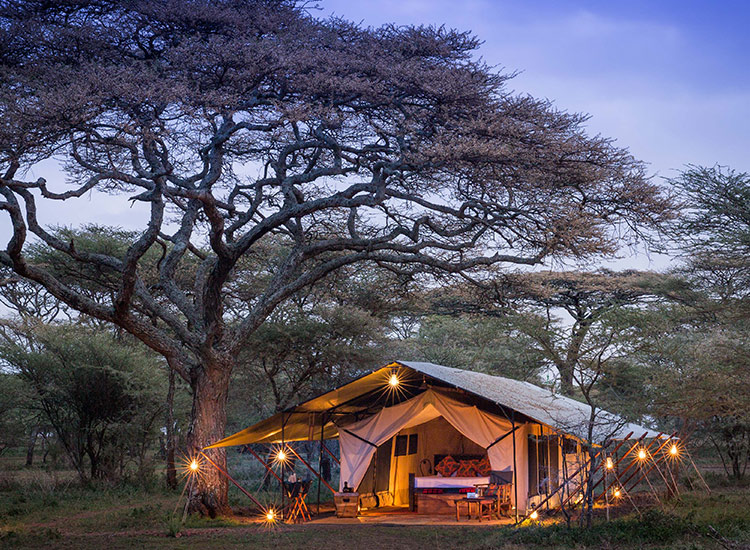 Wilderness Travel sets guests up in luxury tents during Big Five itineraries. // © 2017 Wilderness Travel