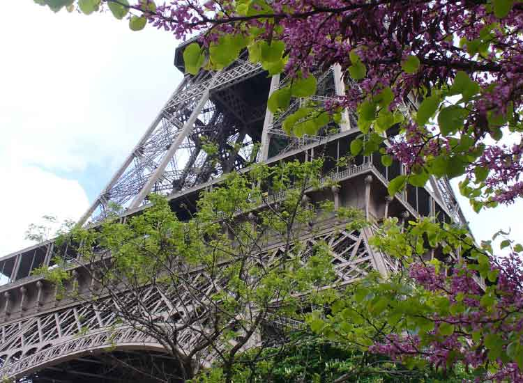 April in Paris, Honorable Mention, 2013 TravelAge West reader photo contest // © 2013 Diana Brooks