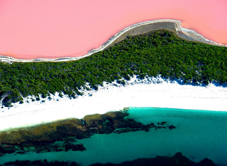 Western Australia's Lake Hillier is a conspicuous shade of pink. // © 2015 Tourism Western Australia