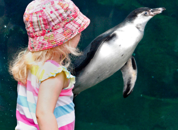Seattle is a family-friendly destination with many appropriate attractions, such as Woodland Park Zoo. // © 2015 Woodland Park Zoo Penguin Window