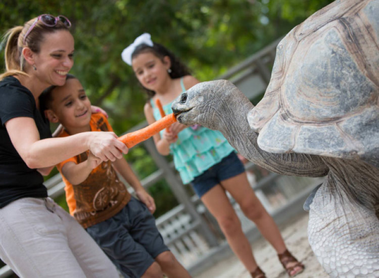 More than 450 exotic animals live at Jungle Island, an interactive zoo and amusement park. // © 2015 Jungle Island