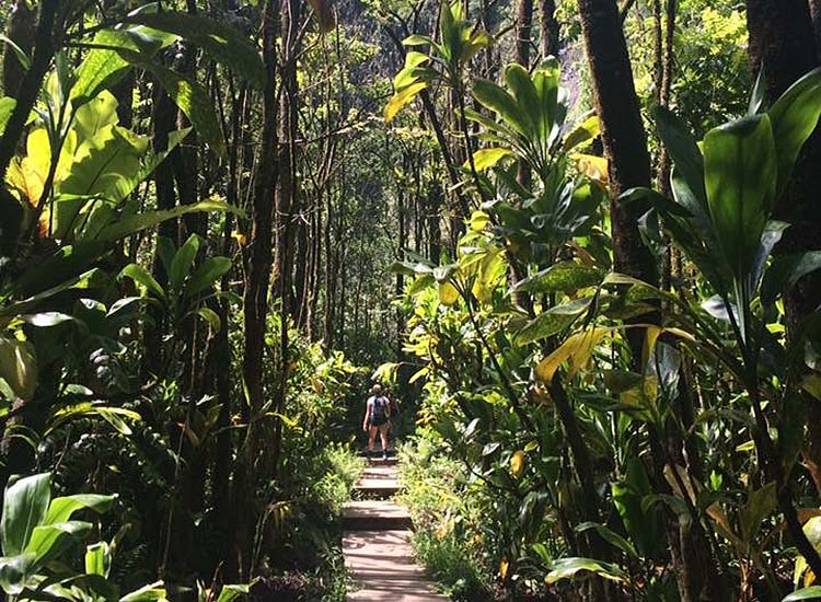 Maui provides a wealth of opportunities for traveling families, such as the 4-mile Pipiwai Trail hike. // © 2016 Lindsay Kamikawa
