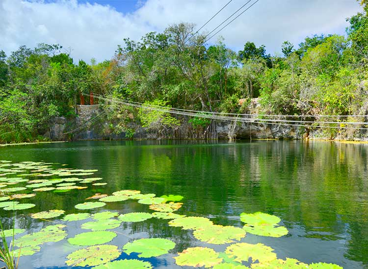 Many cenotes are filled with lily pads and fish. // (c) Cancun CVB