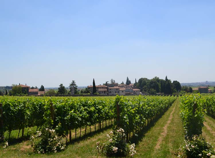 Guests can opt for a vineyard tour and tasting in the Valpolicella viticultural zone of Verona // © 2013 Skye Mayring