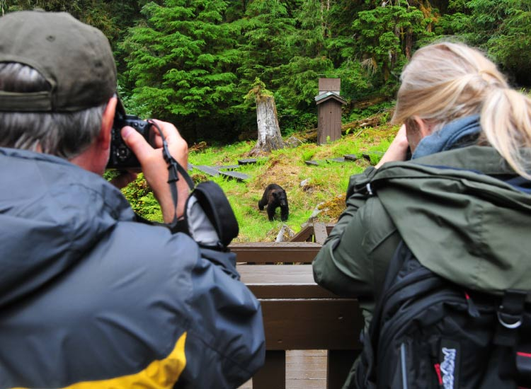 Part of the relatively undiscovered forested slopes of Southeast Alaska's Rainforest Islands, Anan Creek Bear Observatory is one of the best spots for black bear viewing. // © 2015 Christopher Batin