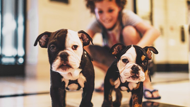 The London West Hollywood at Beverly Hills recently introduced two puppy mascots named Winston and Churchill. // © 2017 The London West Hollywood at Beverly Hills