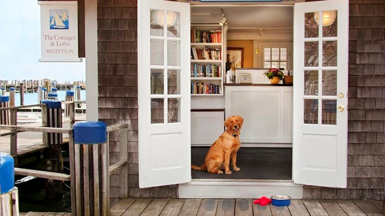Guests can sign up for dog walking services and dog bed turndown services, too. // © 2017 The Cottages at Nantucket Boat Basin
