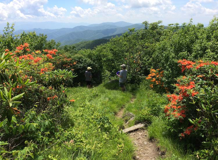 Experience Great Smoky Mountains National Park with an inn-based hiking trip with Wildland Trekking. // © 2016 Wildland Trekking