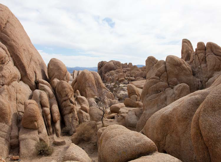 Backroads highlights the Jumbo Rocks formation in its Joshua Tree itinerary. // © 2016 Creative Commons user atomische