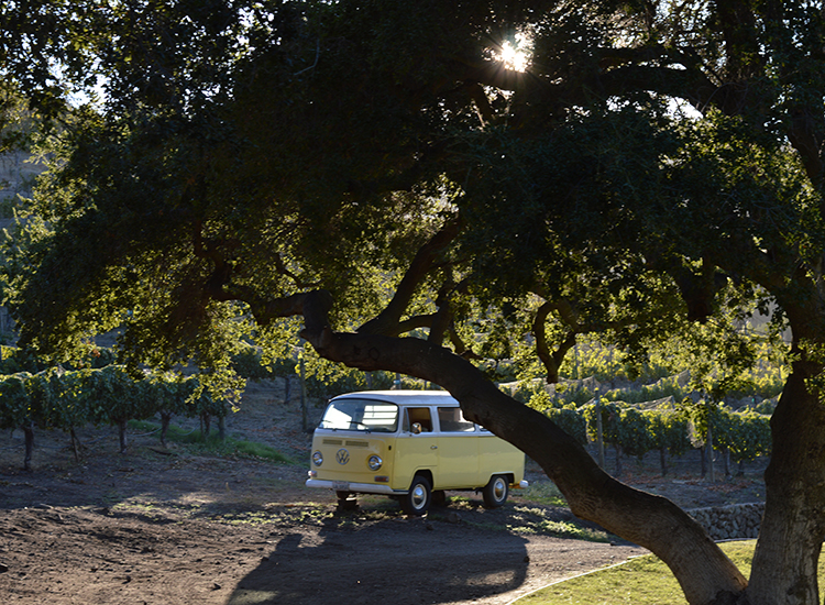 See vintage vehicles such as Volkswagen vans at the last stop of the Vintner Tour. // © 2015 Valerie Chen