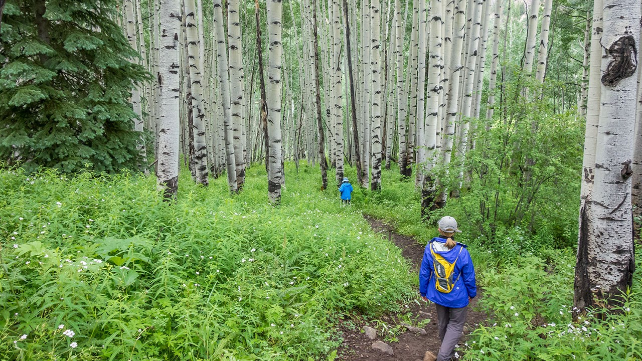Hike through Aspen trees on the American Lake Trail.