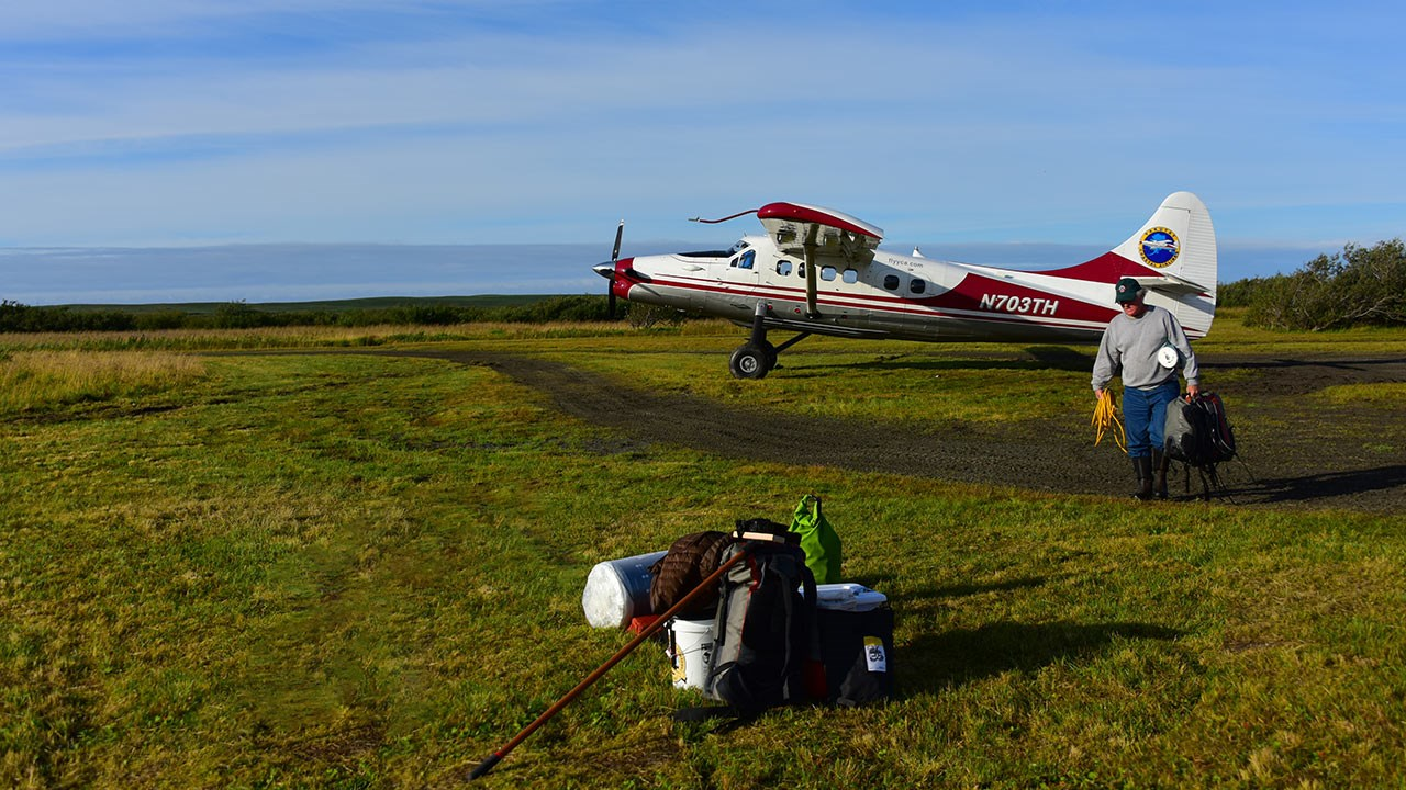 Visitors can take a bush plane to the Tsiu River, a popular spot for photographing brown bears.