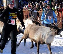 The Running of the Reindeer event at the 2011 Fur Rendezvous winter festival // (c) 2013 Fur Rendezvous