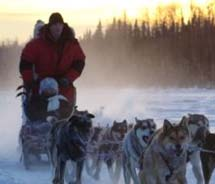 Salmon Berry Tours is offering an Iditarod-theme tour in 2012.  // © 2011 Salmon Berry Tours