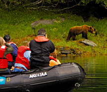 Alaska is known for its wildlife, and AdventureSmith Explorations helps visitors get up close to brown bear habitats.  // © 2011 AdventureSmith...