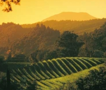 Sunset in the Napa Valley // © 2011 Napa Valley Destination Council
