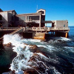 The San Francisco CityPass now offers an option for the Monterey Bay Aquarium. // © 2013 CityPass