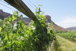 Colorado Wine Country // (c) 2010 Grand Junction