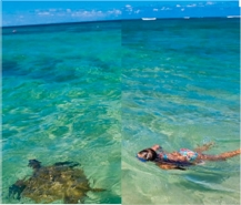 Snorkeling with Turtles // (c) 2010 Hawaii Tourism/Japan