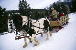 Stay and Ski Deals at 320 Guest Ranch // (c) 2009