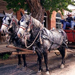 The Overland Stagecoach provides tours around Virginia City, a Montana ghost town. // © 2013 Virginia City, Montana Chamber of Commerce