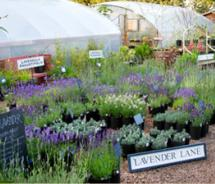 Lavender Fest // (c) 2011 Red Ridge Farms