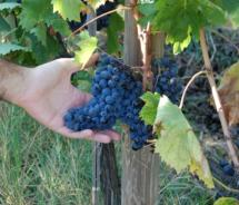 Duchman Family Winery offers grape-to-glass tours daily. // © 2010 Duchman Family Winery