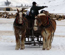 Sleigh rides at the National Elk Refuge // © 2011 Double H Bar, Inc.