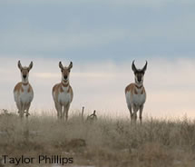 Eco Tour Adventures leads wildlife tours of Wyoming sites, including Grand Teton National Park. // (c) Taylor Phillips