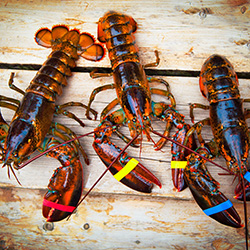 <p>Agents can choose to receive three Maine lobsters or two pounds of salmon if they book qualifying trips with Auto Europe. // © 2017...