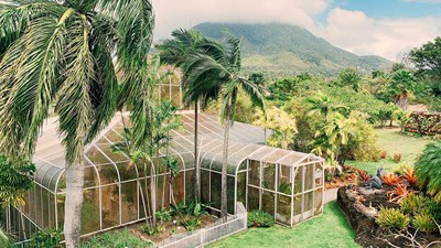 Been There, Do This: The Botanical Gardens of Nevis in the Caribbean