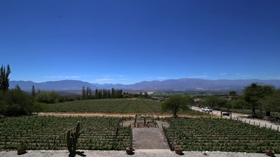 Been There, Do This: Wine Tasting in Cafayate, Argentina