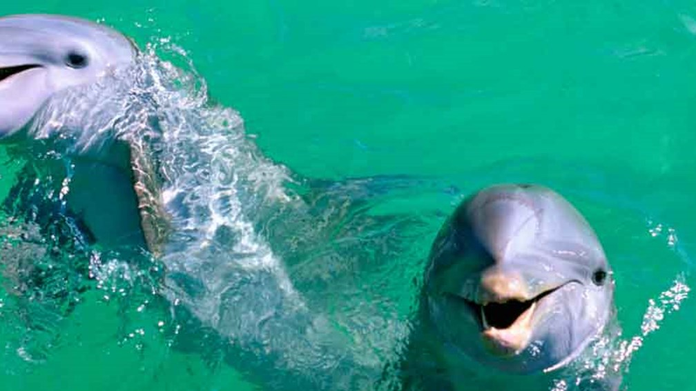 It is common to see around 20 dolphins during the trip. // © 2015 Thinkstock 2