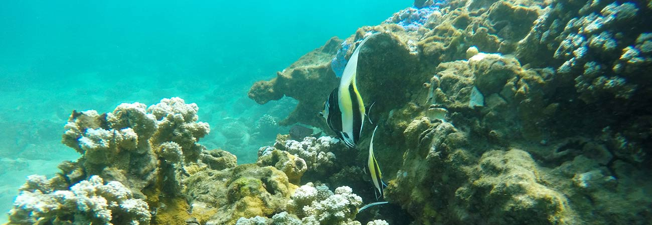 Try This: Snorkeling and Underwater Photography on Maui