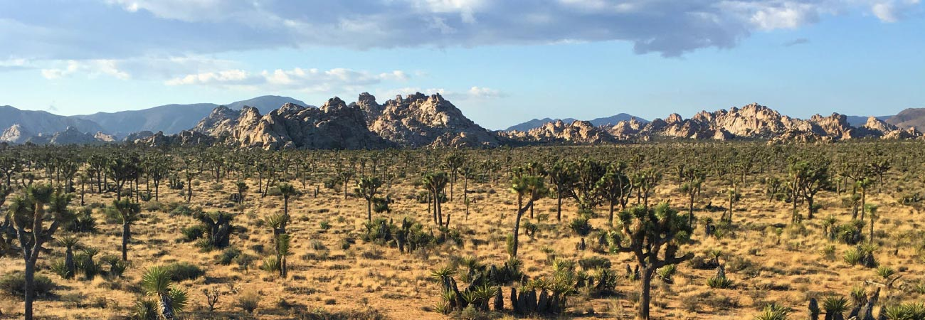 Family Vacation Journal: Joshua Tree National Park