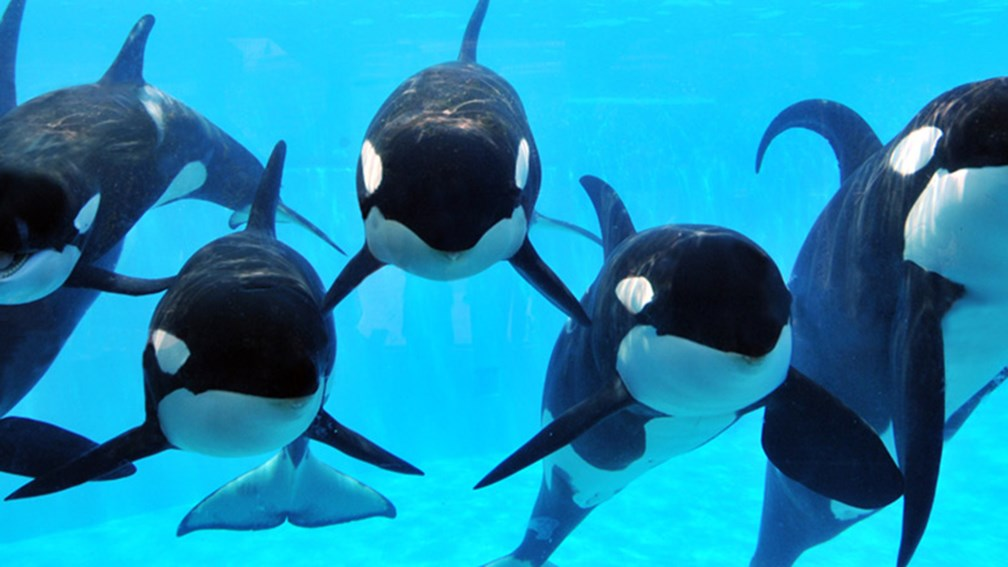 Inside SeaWorld's New Park to Planet Campaign