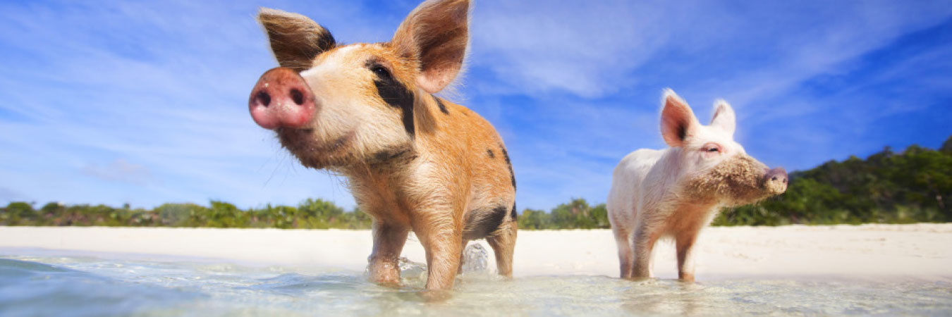 Kid Friendly Animals In The Caribbean Travelage West