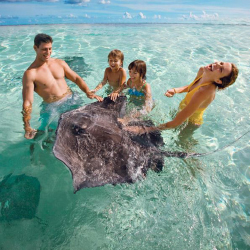 Families can feed stingrays at Stingray City on Grand Cayman. // © 2014 Cayman Islands Department of Tourism