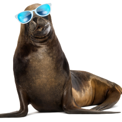 Families can snorkel with sea lions during this eight-day cruise. // © 2014 Thinkstock