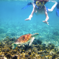 <p>Lobsters, stingrays, eels, fish and turtles can be found in and around Aruba's coral. // © 2014 Thinkstock</p><p>Feature image (above): The...