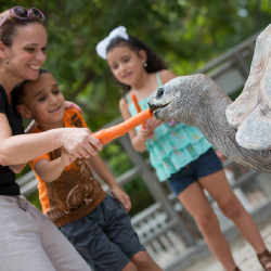 <p>The 18-acre Jungle Island is an interactive zoo and amusement park. // © 2015 Jungle Island</p><p>Feature image (above): Ocean Drive epitomizes the...
